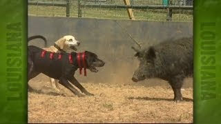 getlinkyoutube.com-Uncle Earl's Hog Dog Trials (2004)