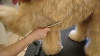 Grooming Video