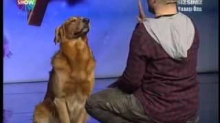 getlinkyoutube.com-أذكى كلب في العالم (باسكال) 2012