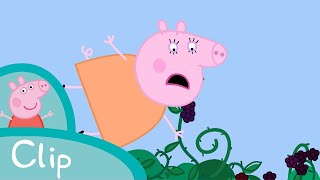getlinkyoutube.com-Peppa Pig - The blackberry bush (clip)
