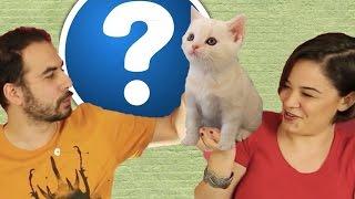 getlinkyoutube.com-Bu Kedi Kaç Yaşında? - Cezalı Yarışma