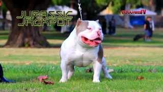 getlinkyoutube.com-Jurassic Jackpot (R.I.P cashpot son) - BullyWebTV