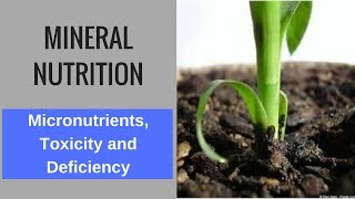 Mineral Nutrition- Micronutrients, Toxicity and Deficiency