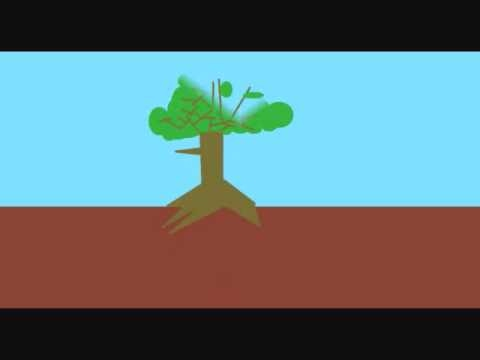 how plants grow animation