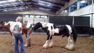 getlinkyoutube.com-Dekking (stallion is for sale) Jessie door Celtic Sir Gwynfor    Tinkers.