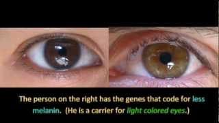 getlinkyoutube.com-Genetics and Eye Color