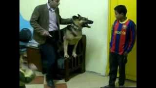 getlinkyoutube.com-حارس الكلب الاول فى مصر 3.3gp