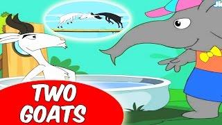 getlinkyoutube.com-Foolish Goats |  मूर्ख बकरी | Animal Stories for Kids in Hindi by Amar Gathayein