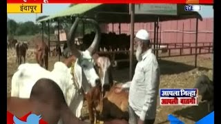 getlinkyoutube.com-Indapur : Pathan Family Have 104 Cows In Their Shed