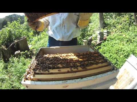 Backyard Beekeeping   The 2017 Season is Upon Us