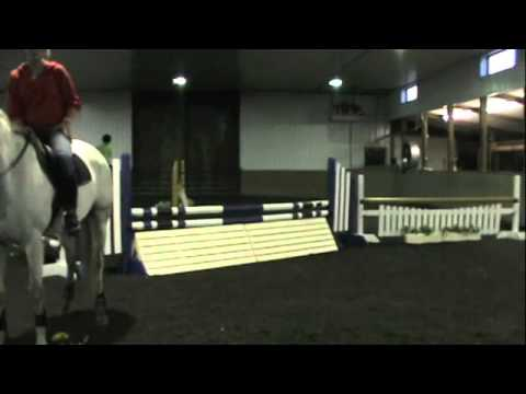 Jewels- Hanoverian Jumper FOR SALE/LEASE
