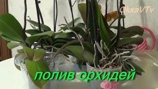 getlinkyoutube.com-полив орхидеи, как поливать орхидеи Phalaenopsis. how to water orchids Phalaenopsis