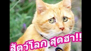 getlinkyoutube.com-รวมคลิปฮา รวมคลิปสัตว์ตลกๆ คลิปสัตว์น่ารัก ๆ คลิปขำขำฮาฮา Fail สัตว์ๆ #2