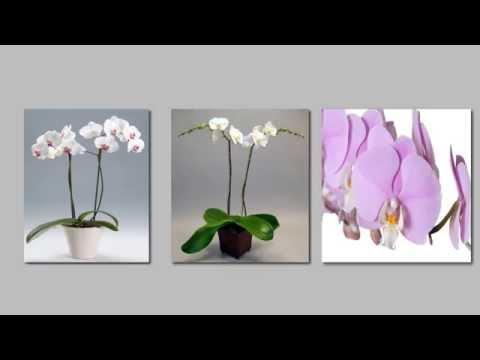 Come fare rifiorire un 39 orchidea fai da te mania - Come curare un orchidea in casa ...