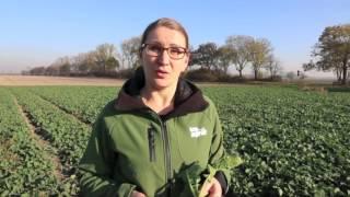 """getlinkyoutube.com-Pogotowie polowe """"top agrar Polska"""" – odc. 3. Problemy na plantacjach rzepaku ozimego"""