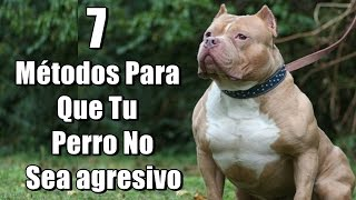 getlinkyoutube.com-7 Métodos Para Que Tu Perro No Sea agresivo ni peligroso (Pitbull, Rottweiler, Bull terrier, etc.)