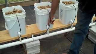 getlinkyoutube.com-Dutch Bucket Aquaponics