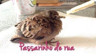 getlinkyoutube.com-Como cuidar de passarinho da rua.