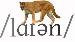 getlinkyoutube.com-Animal Alphabet   Learn English   Vocabulary
