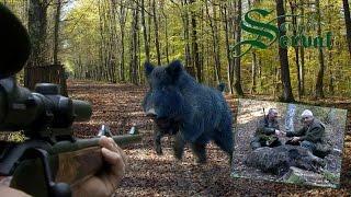 getlinkyoutube.com-Wild Boar Hunting in Croatia ,part 3 - Kroatische Keiler 3 - Drückjagd