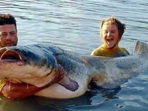 Maiores Peixes do mundo