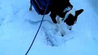 Tay Hunting Ice Weasles