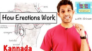 getlinkyoutube.com-How Erections Work - Kannada