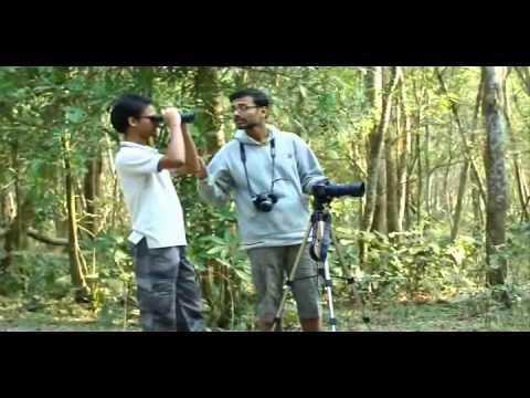 A short docu on Bird Watching