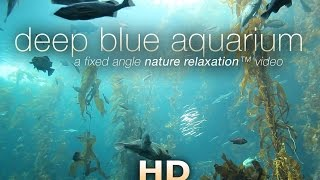 "getlinkyoutube.com-""Deep Blue Aquarium"" 1 HR Static Nature Relaxation Screensaver Video 1080p"