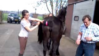 getlinkyoutube.com-Portfolio paard insiminatie Larissa
