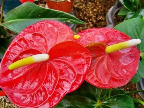 Cuautla, Edo. Morelos México CONAPLOR (2-6) Invernaderos.wmv
