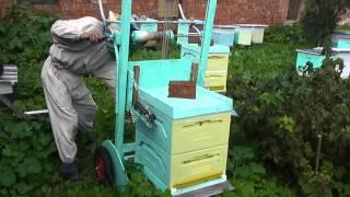getlinkyoutube.com-Пчелиный ринг.Ставлю квебек.