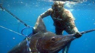 getlinkyoutube.com-Spearfishing One Fish