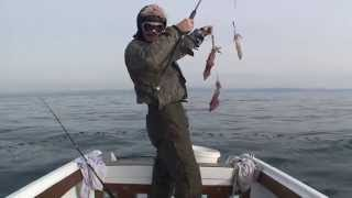 getlinkyoutube.com-Calamari