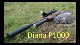 getlinkyoutube.com-Dove Hunting with Airgun Diana P1000 PCP