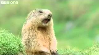 getlinkyoutube.com-Screaming Alone Beaver