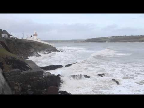 White Horses In Youghal