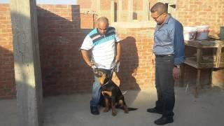 getlinkyoutube.com-لقائات الحاج عادل ابو صغير  ( الكلاب الرود)
