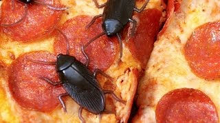 getlinkyoutube.com-COCKROACHES ON PIZZA!