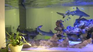 getlinkyoutube.com-我が家のサメ・ウツボ・エイ水槽