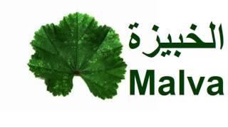 getlinkyoutube.com-Mohamed Elfaid - Malva محمد الفايد - الخبيزة