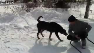 getlinkyoutube.com-Собака нассала на человека, хаха / Dog pissed