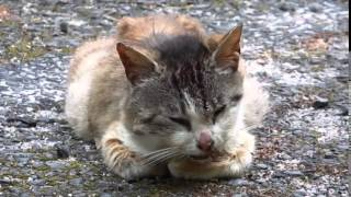 getlinkyoutube.com-今にも死にそうな野良猫 Stray cat dying at any moment