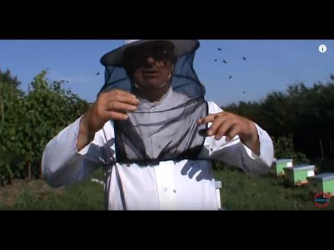 1/3 Inmultirea albinelor - Volumul 3 al Scolii de Apicultura va fi dedicat in mare acestui subiect