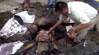 getlinkyoutube.com-Sacando Barbacoa  en Tampacán SLP