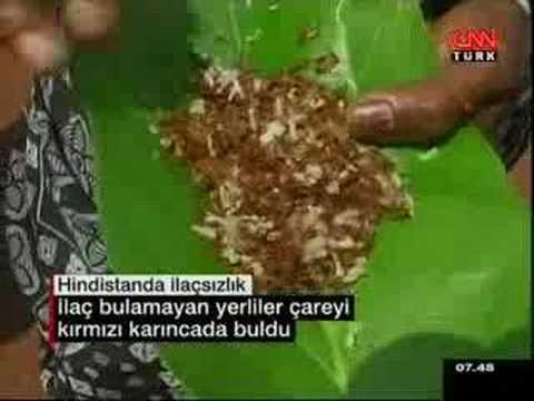 SOSTV - Yerli Karınca yiyen yerliler