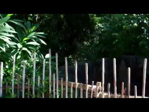 Oasis at Disney's Animal Kingdom! Walt Disney World 2011 HD
