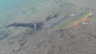 getlinkyoutube.com-Ice Fishing Brook Trout - Under Water View!