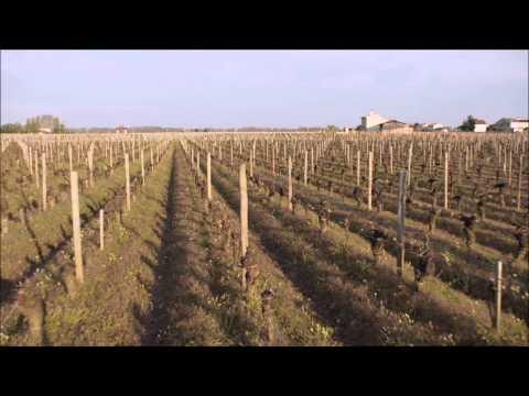 Quand le rouge devient plus précieux que l'or : Red Obsession, un documentaire avec la voix de Russell Crowe sur la frénésie chinoise pour le vin