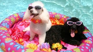 Who says animals can't party? - The best animal party video